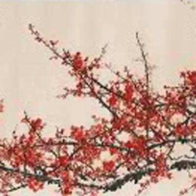 plum blossoms in snow